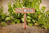 weeds tall